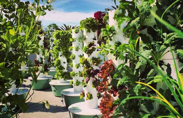 urban-farms-pic
