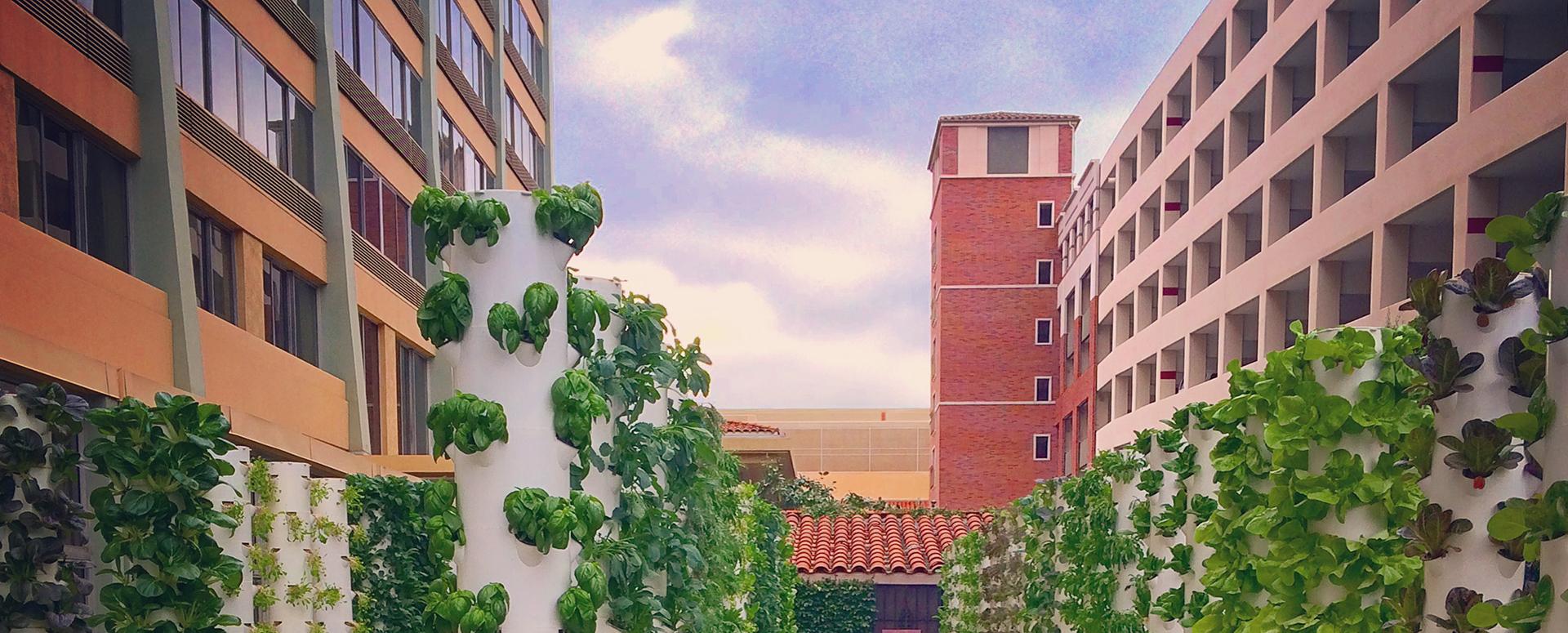 Urban Farms La Urban Farms